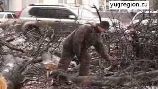 В Ростове на «маршрутку» упало дерево(, 2012-02-28T07:56:52.000Z)
