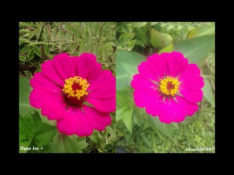 [Camera Test] Oppo Joy Plus VS Advan S5E NXT (Coba2 Tes Kamera 5MP dengan 3MP