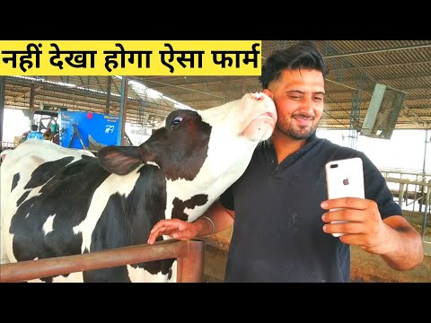 Modern Dairy Farm in INDIA Punjab Most Advanced high Technology Agriculture MACHINERY