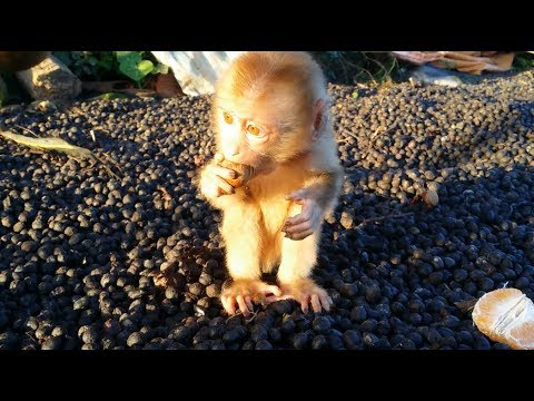 What Does A Cute Baby Monkey Eat In The Morning?