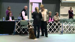 Obedience - Masters Utility Class - Jump Height 20 Inches