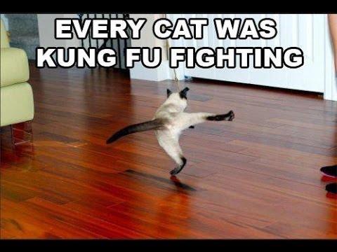 Kung Fu Cat Fighting. ...