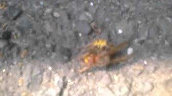 Eliminex Bee Control Middlesex County NJ 732-640-5488 Stinging Bee Removal & Wasps New Jersey