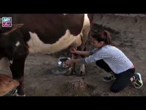 Challenge | Buffalo Milking | Desi Kuriyan Season 7 | Ahmed Ali Butt