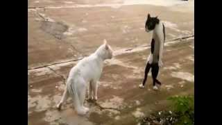 Fail compilation vol.2 - Funny and crazy animals