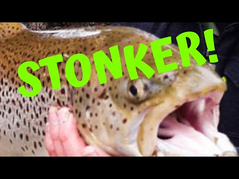 Catching Goulburn River Trout, Trout Opening 2019 How To Catch Stonkers.