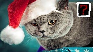 Животные, которые терпеть не могут Рождество и Новый год!