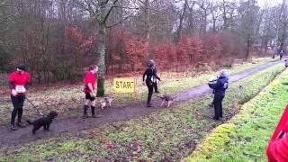 Canicross: Team Border Terrier