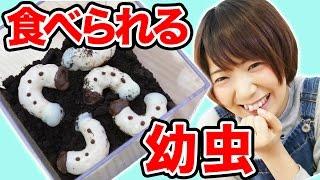 【どっきり】食べられる幼虫を虫嫌いにプレゼントしてみた!