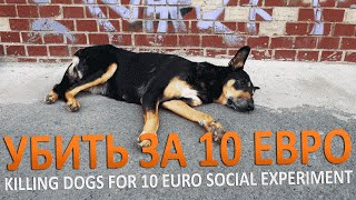 УБИТЬ СОБАКУ ЗА 10 ЕВРО | KILLING DOG`S FOR 10 EURO - SOCIAL EXPERIMENT