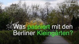 Besuch bei Berliner Kleingärtnern
