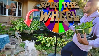 EXOTIC ANIMAL SPIN TO WIN on THE RANCH !