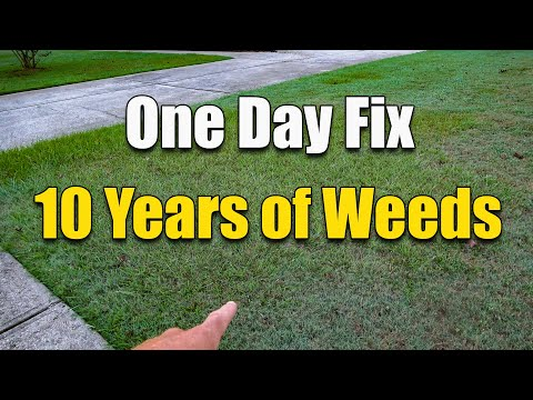 How to Fix an Ugly Lawn - Killing Lawn Weeds