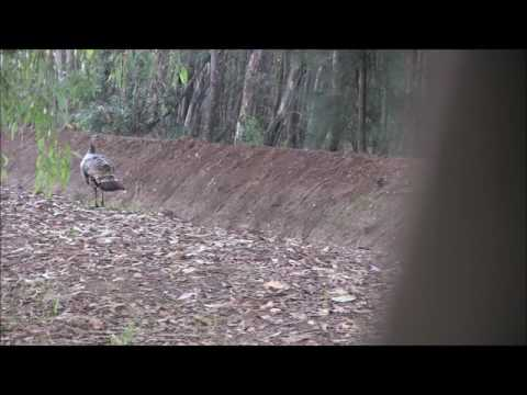 Toby's 2016 California Fall AirGun Turkey Hunt