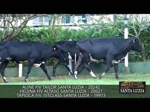 SANTA LUZIA   LOTE 95
