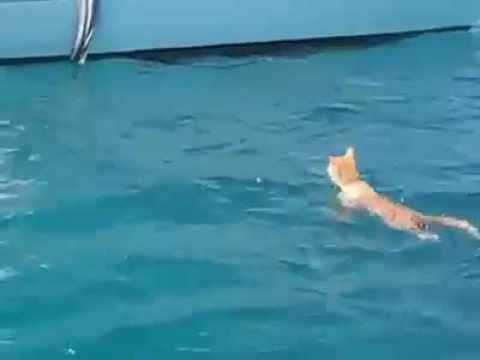 cat  can swim || swimming cat moment !!