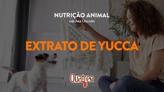 Nutrição Animal com Ana Chizzotti - Extrato de Yucca