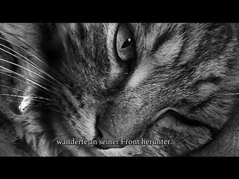 Hässlich die Katze (ugly the cat german)