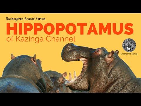 The Kazinga Channel Hippopotamus: Science and Education of The Kazinga Channel Hippopotamus