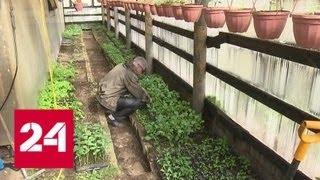 Смотреть видео Налог на теплицы: мифы и факты - Россия 24 онлайн