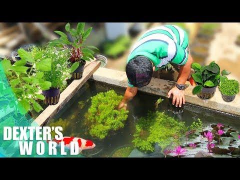 A TOUR TO THE PLANTATION OF AQUATIC PLANTS!