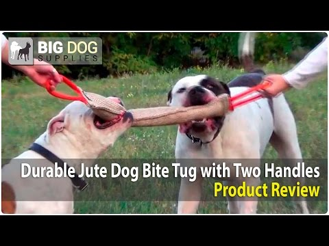 Lovely American Bulldogs Playing with Large Jute Bite Tug
