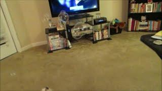 Vlog #495 Maltese Puppy Afraid  Of Bubbles!  August 30, 2014
