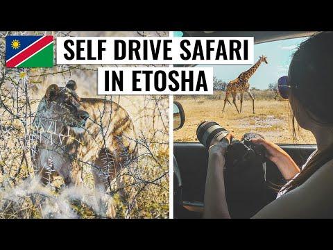 AMAZING NAMIBIA SAFARI IN ETOSHA   VLOG
