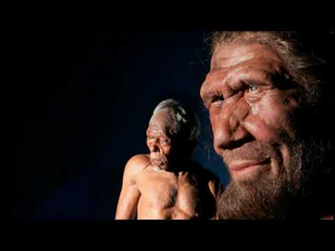 Scientists to Grow 'Mini Brains' with Neanderthal DNA