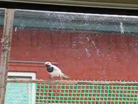 Почему птицы бьются в окно научное объяснение