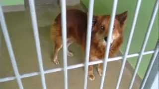 № 451 Это Америка - Приют для животных Взять собаку в дом  11.02.1011