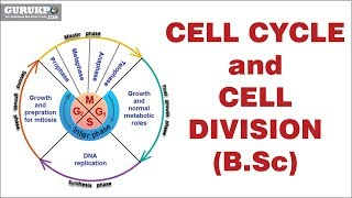Cell Cycle and Cell Division(B.Sc)