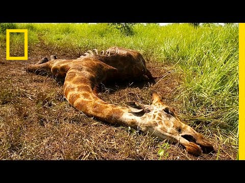 American woman posing with dead 'rare' giraffe she shot in South Africa sparks outrage