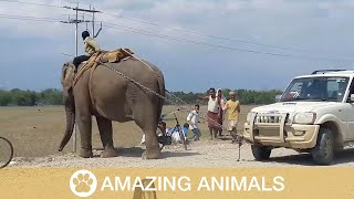 Elephant Rescues Stranded Car