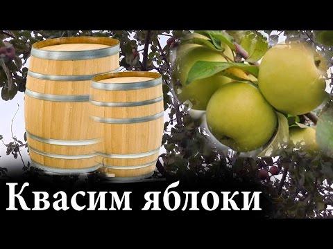 Как замочить яблоки в бочке на зиму