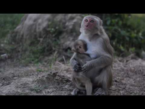 Volunteering at Laos Wildlife Rescue Centre