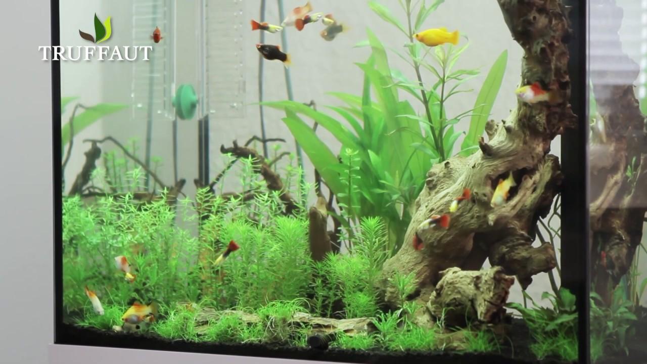 quel clairage pour votre aquarium jardinerie truffaut tv youtube. Black Bedroom Furniture Sets. Home Design Ideas