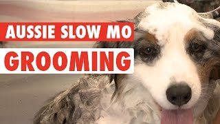Dog Makeover || Australian Shepherd Gets Her Fur Did