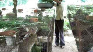 INDIA-RABBIT-FARMS VIDEO