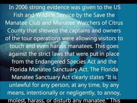 Endangered Alala and Manatee
