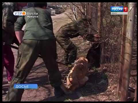 Бездомных собак в Иркутске теперь будут ловить только в присутствии волонтёров