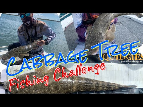 Cabbage Tree Point Fishing Challenge