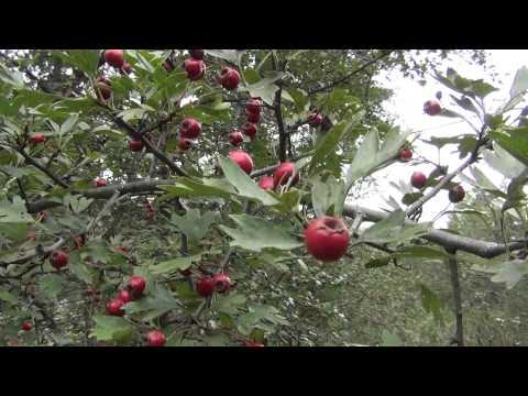 ЖК Life Ботанический сад - квартиры в новостройке Свиблово