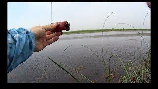 Рыбалка по змееголову в непогоду. Начало лета / Snakehead fishing under the rain and wind