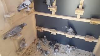 Oyun kuşun da yavru uçum vede yerine inmesi için yapilacak işler için bilgilendirme. .