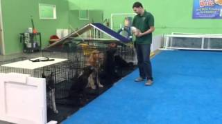 Crate Training - Miami's Certified Dog Trainers - Boarding And Training