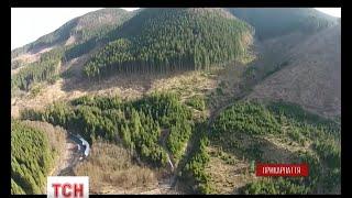 Останні дні Карпат тотальне вирізання карпатського лісу