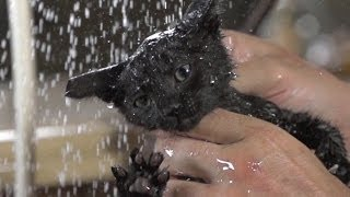 Super Slow Motion Kitten Bathing