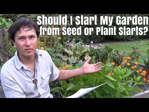 Should I Start My Garden from Seed or Starter Plants & More Garden Q&A