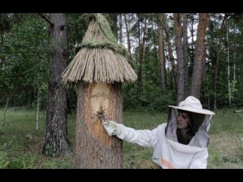 Заселение колоды пчёлами.